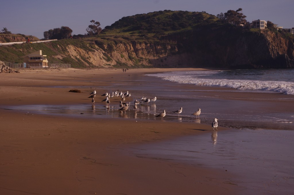 A picture of a cliff by a beach with seagulls